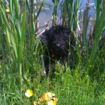 Hiding in the Rushes