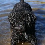 Definitely a Water Dog!